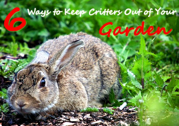 6 ways to keep critters out of your garden mother 39 s home - How to keep rabbits out of a garden ...