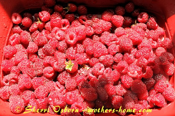 washing your raspberries