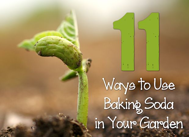 Image result for use baking soda in garden