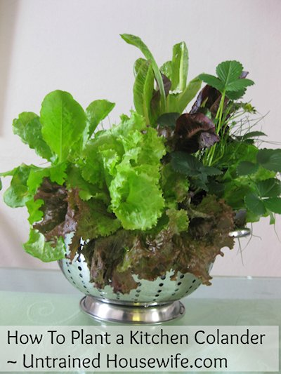 How to Plant a Kitchen Colander