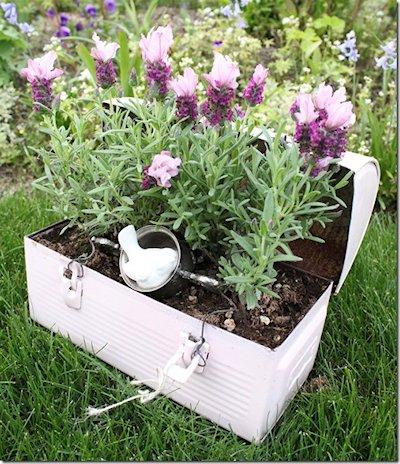 Lunchbox Planter