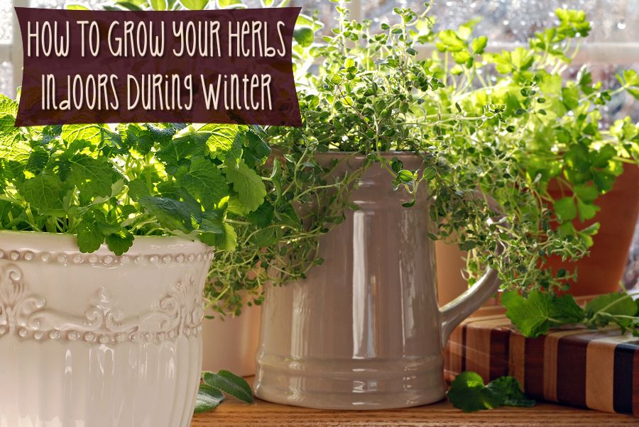How To Grow Your Herbs Indoors During Winter