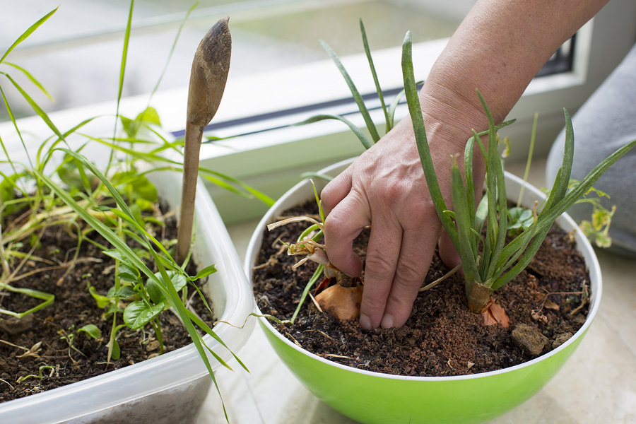 How to plant herbs